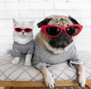 Adorable Instagram Pets You Will Want to Have on Your Feed